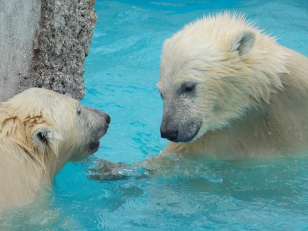 動物園6月+151_convert_20130618223008