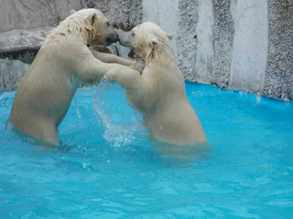 動物園6月+138_convert_20130619133448