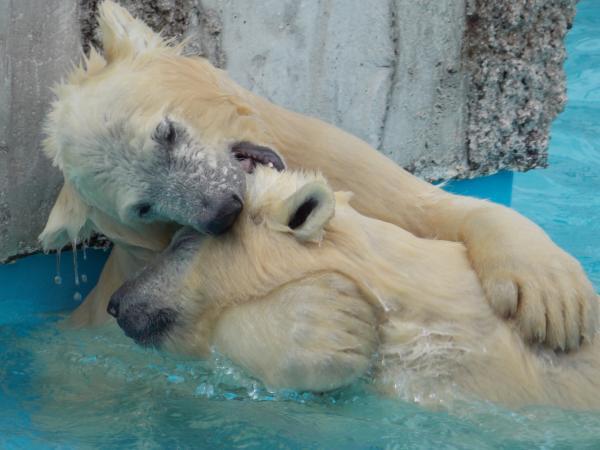 動物園6月+152_convert_20130619133856