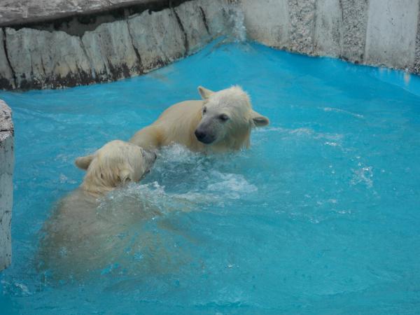 動物園6月+170_convert_20130619134720