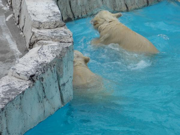 動物園6月+183_convert_20130619134921
