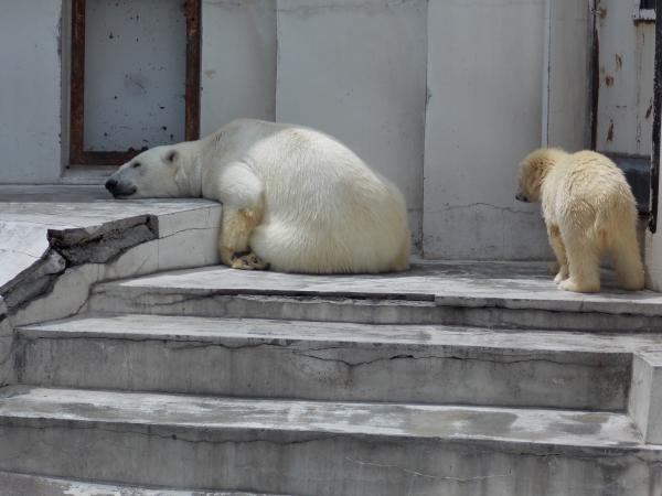 動物園6月+220_convert_20130619135119