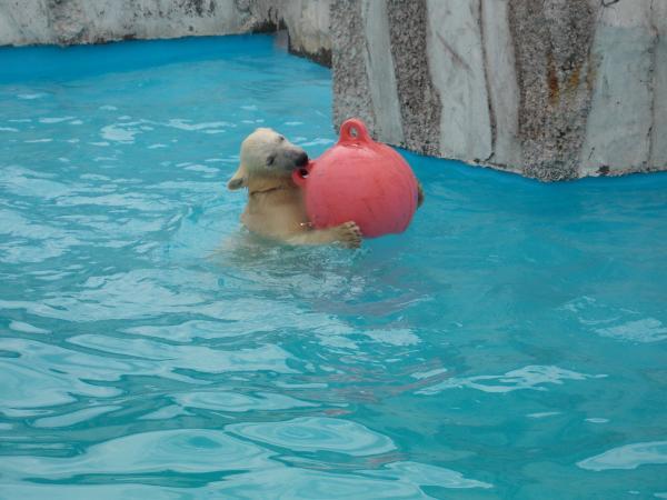 動物園6月+233_convert_20130619135951