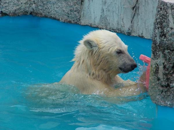 動物園6月+253_convert_20130619140747