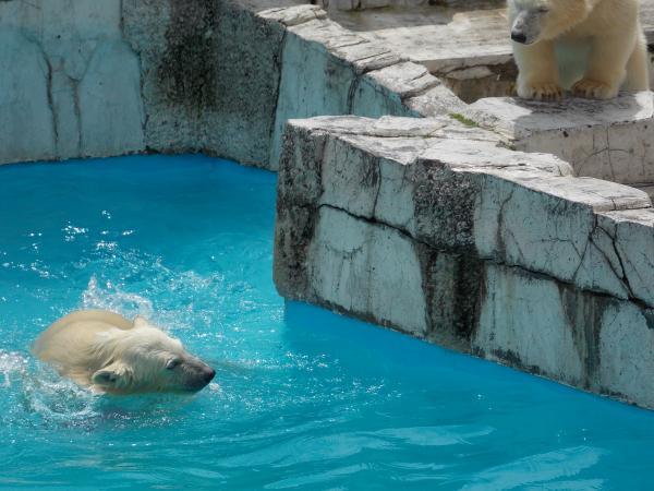 動物園6月+338_convert_20130619144603