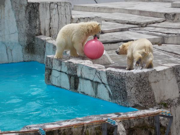 動物園6月+340_convert_20130619144720