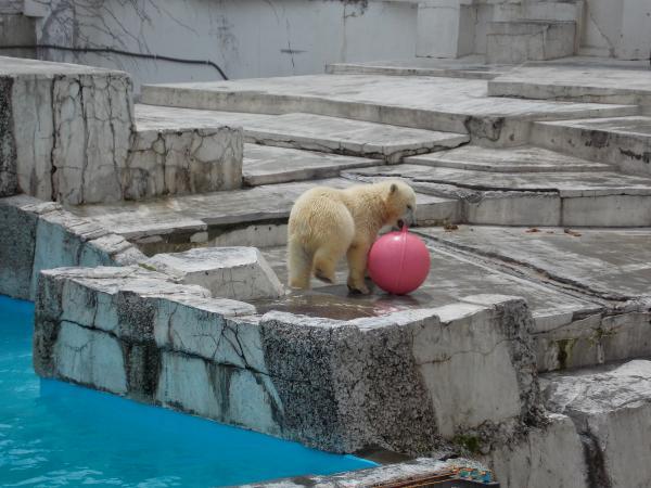 動物園6月+341_convert_20130619144754