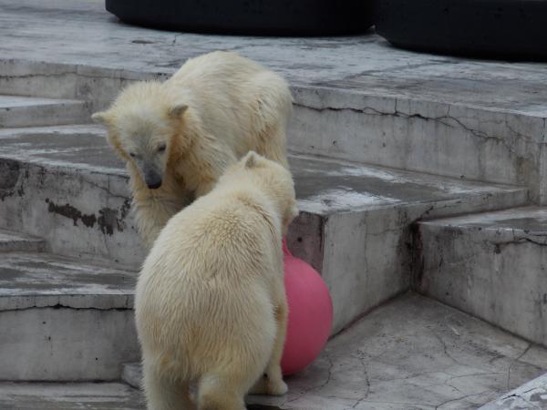 動物園6月+343_convert_20130619144847
