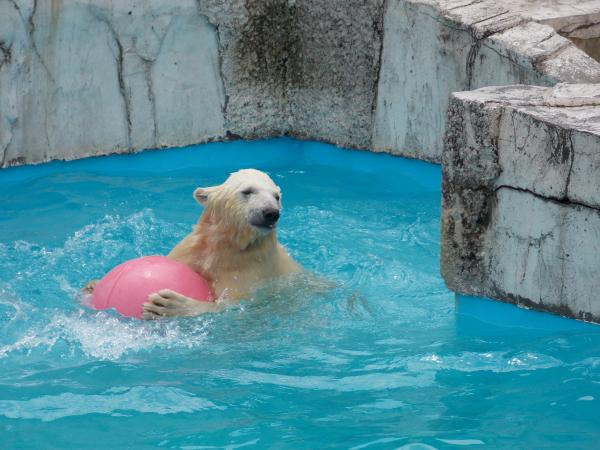 動物園6月+304_convert_20130621202717
