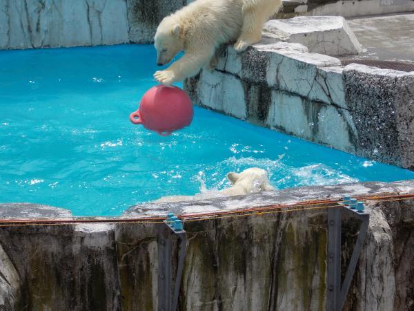 動物園6月+339_convert_20130621204529