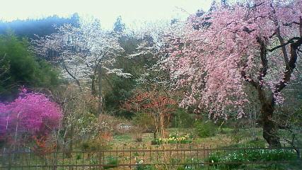 桜☆2010