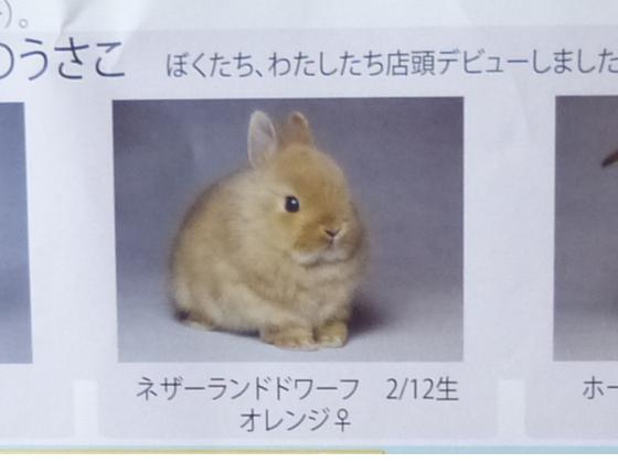ぴょん子のリーフ02