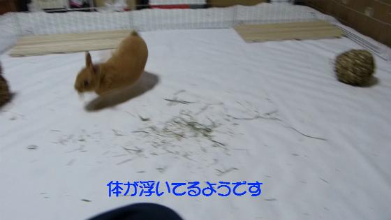 ぴょん子130503_01