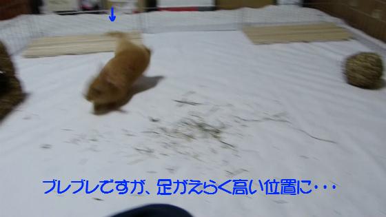 ぴょん子130503_02