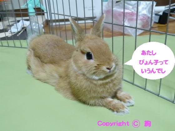 ぴょん子130723_01