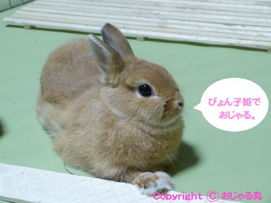 ぴょん子130723_02