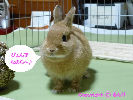 ぴょん子130723_04