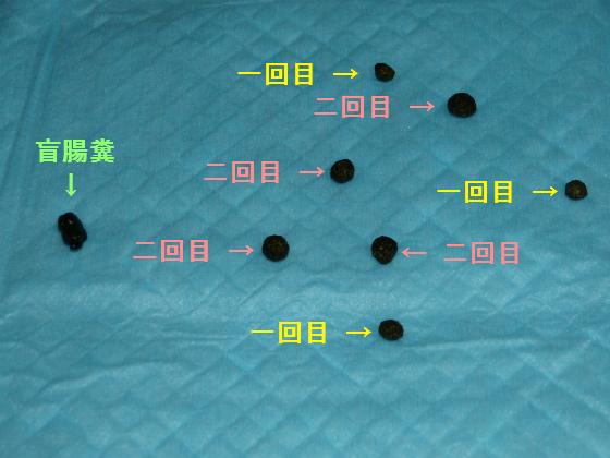 ぴょん子130421_22