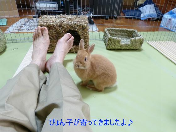 ぴょん子130519_01