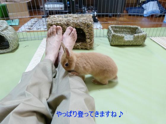 ぴょん子130519_02