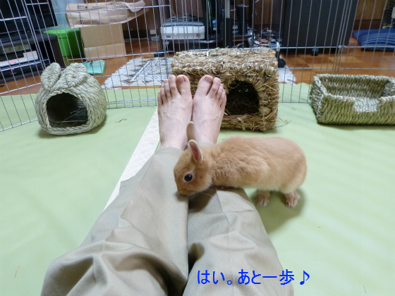 ぴょん子130519_03