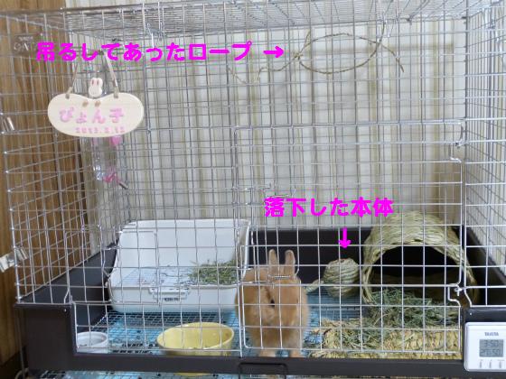 ぴょん子130614_04