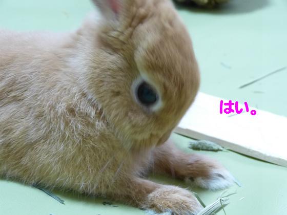 ぴょん子130617_03