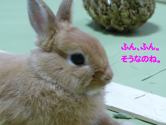 ぴょん子130617_04