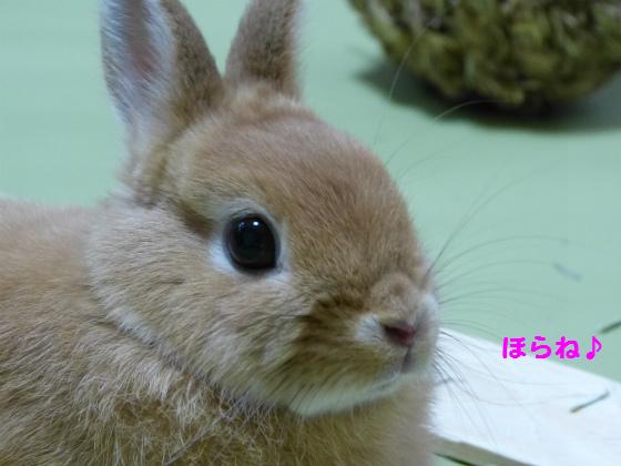 ぴょん子1306018_03