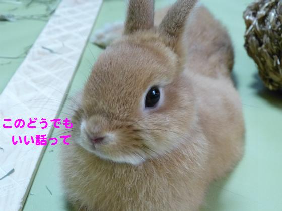 ぴょん子1306018_06