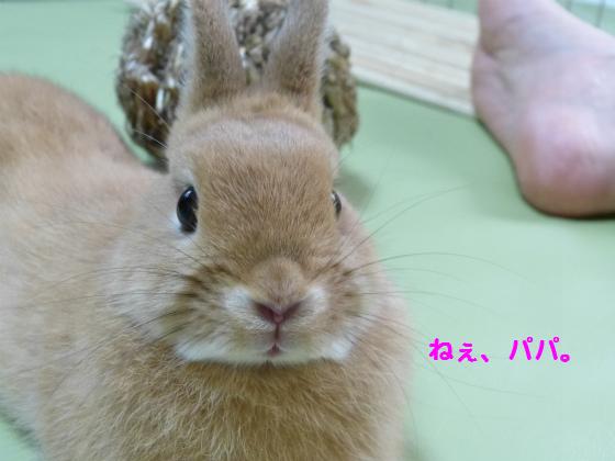 ぴょん子1306018_07