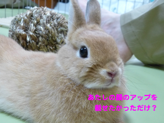 ぴょん子1306018_08