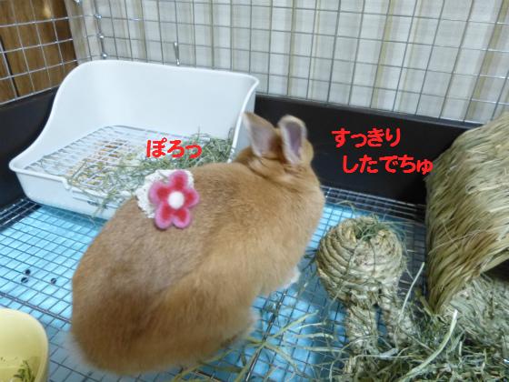 ぴょん子130701_06
