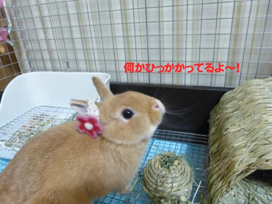 ぴょん子130701_07