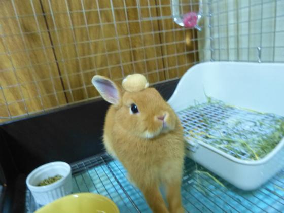 ぴょん子130704_04