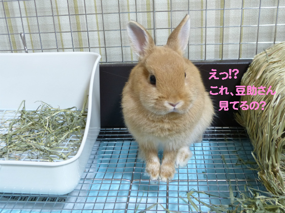ぴょん子130727_02