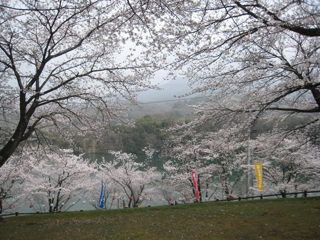 たからだの里戸川ダム公園・環の湯の桜