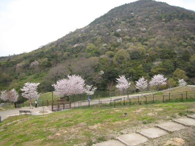善通寺五岳の里市民集いの丘公園の桜