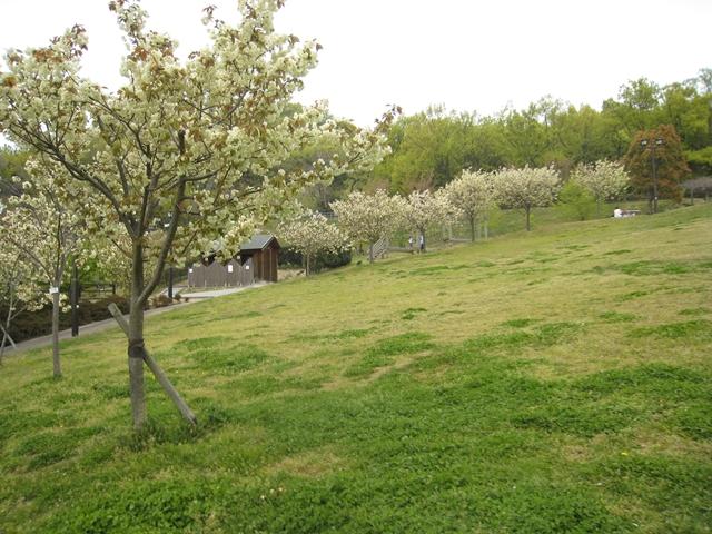 如意輪寺公園の一葉