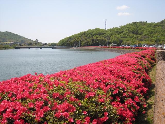 三谷三郎池のツツジ