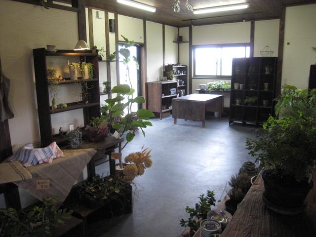 zazu plantes et cafe