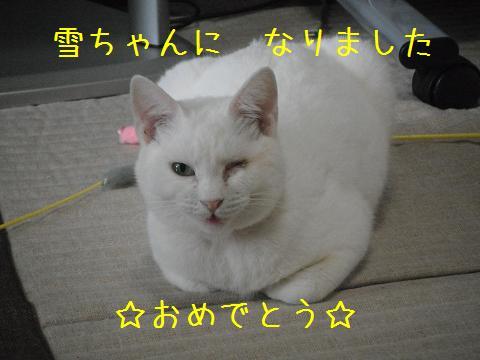 20111225080124219.jpg
