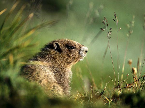 groundhog_567_600x450.jpg