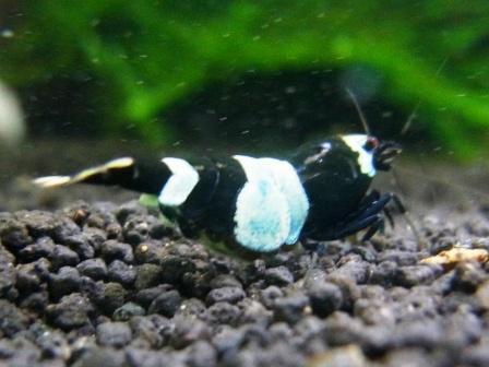 シャドー抱卵2