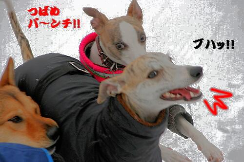 IMG_7630 - コピー (2)
