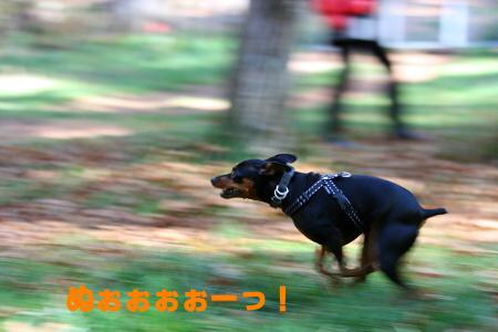IMG_3664_20111031235219.jpg
