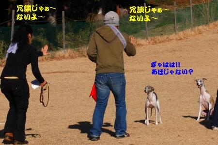 _MG_6795_20101230214317.jpg