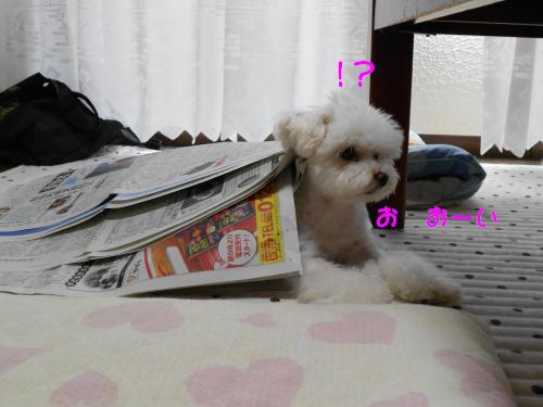 036_convert_20110905212453.jpg