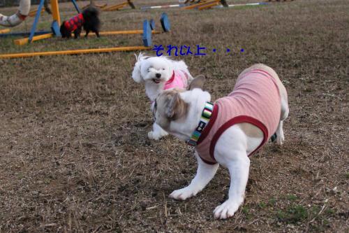 045_convert_20111205201103.jpg