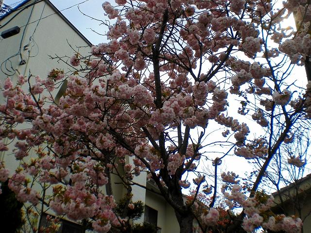 Unknownな花